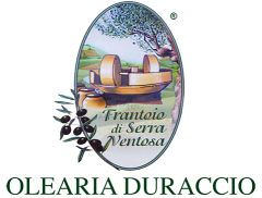 Olearia Duraccio